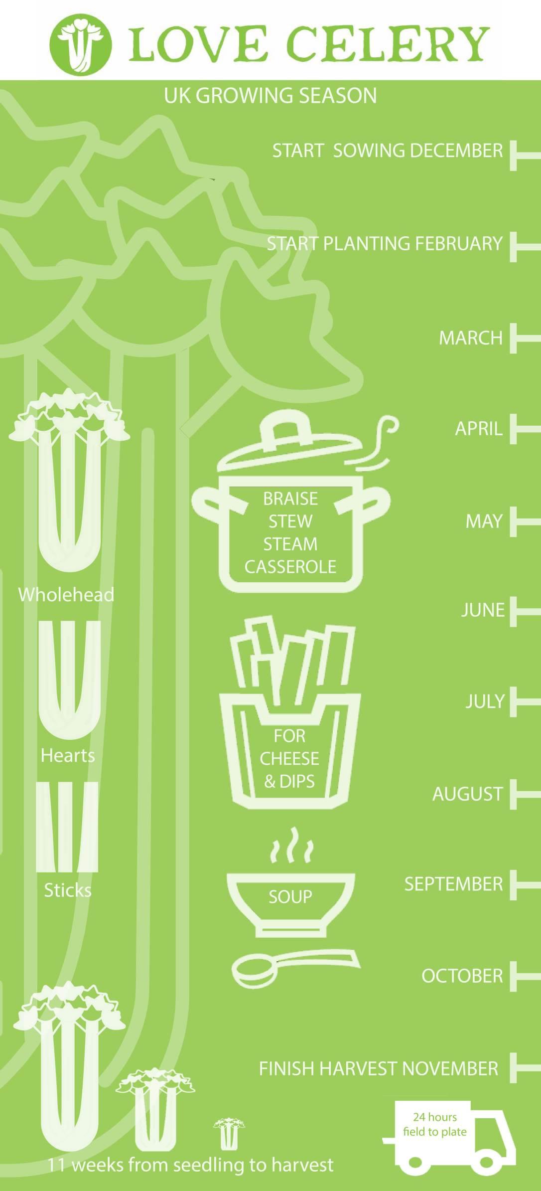 Love celery infographic 2